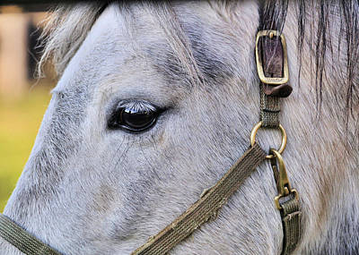 Photograph - The Gray Pony by JAMART Photography