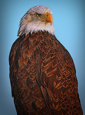 Photograph - The Great Bald Eagle by Debra and Dave Vanderlaan