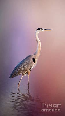 Egret Photograph - The Great Blue Heron By Darrell Hutto by J Darrell Hutto