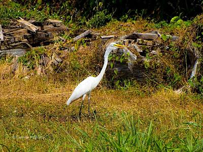 Egret Against Driftwood Art Print