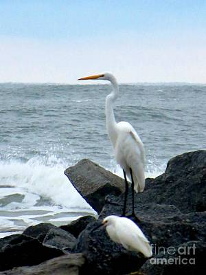 Photograph - The Great Egret And Snowy Egret Florida Shore Birds by Tim Townsend