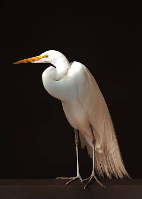 Photograph - The Great Egret by Susan Rissi Tregoning