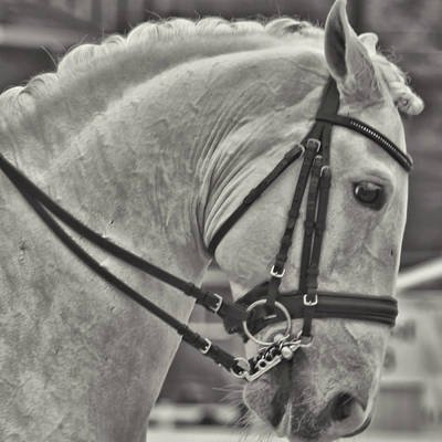 Photograph - The Great Horse by JAMART Photography