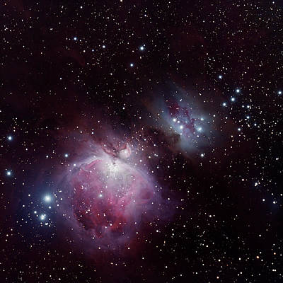 Photograph - The Great Nebula In Orion by Alan Vance Ley