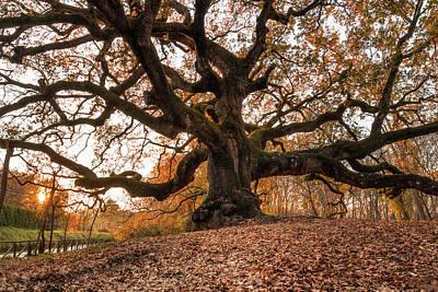 The Great Oak Art Print