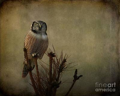 Photograph - The Great Orator by Heather King