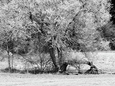 Photograph - The Great Sallow Bw by Jouko Lehto