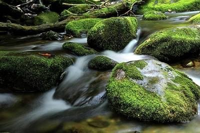 Photograph - The Great Smoky Mountains National Park Mossy Boulders by Carol Montoya