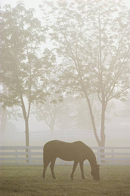 The Great Thoroughbred Gelding Forego Art Print by Raymond Gehman