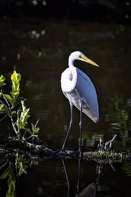 Photograph - The Great White Egret  by Saija  Lehtonen
