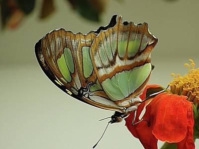 Photograph - The Green Butterfly by Karen McKenzie McAdoo