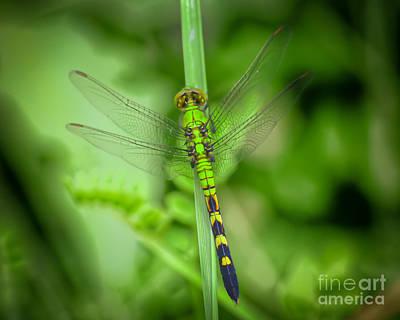 Dragonfly Photograph - The Green Dragon by Kerri Farley