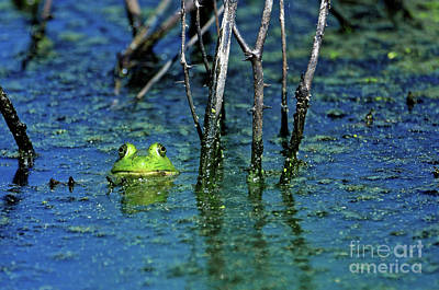 Photograph - The Green Frog by Paul Mashburn
