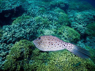 Photograph - The Green Garden Fish by Michael Scott