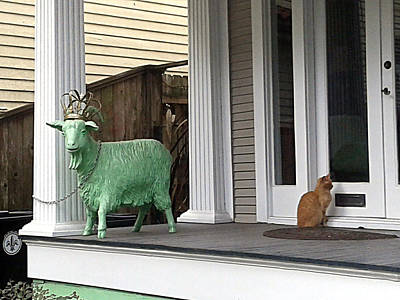 Photograph - The Green Goat And The Tabby Cat by Michael Hoard