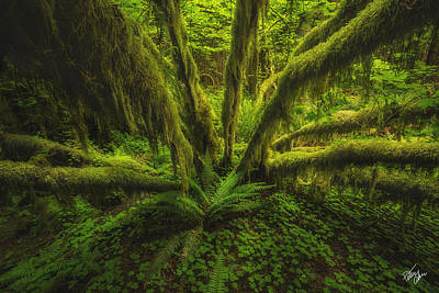 The Green Monster Print by Peter Coskun