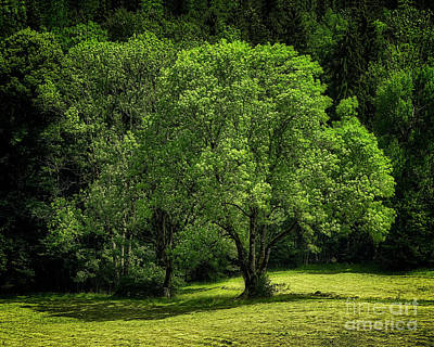 Photograph - The Green Of Summer by Edmund Nagele