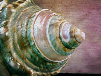 Photograph - The Green Spiral Seashell by Absinthe Art By Michelle LeAnn Scott