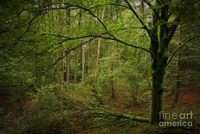The Green Tree Art Print by Rikard Strand