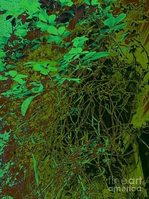 Photograph - The Green Vine by Nancy Kane Chapman
