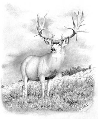 Drawing - The Greenwood Buck by Darcy Tate