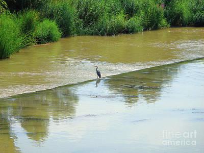Photograph - The Grey Heron by Don Pedro De Gracia