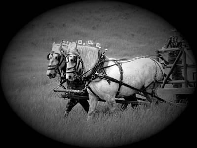 The Grey Team - Bar U Ranch Art Print by Al Bourassa