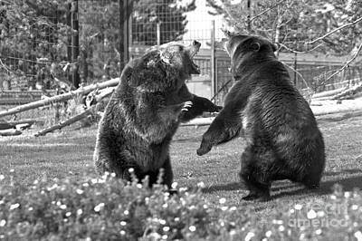 The Grizzly Brawl Black And White Art Print