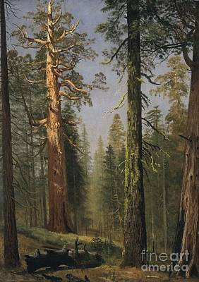 Sequoia Painting - The  Grizzly  Giant  Sequoia by Celestial Images