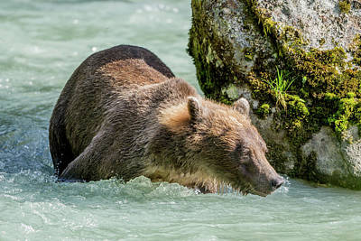 Christmas Christopher And Amanda Elwell - The Grizzly Swimming Hole by David F Hunter