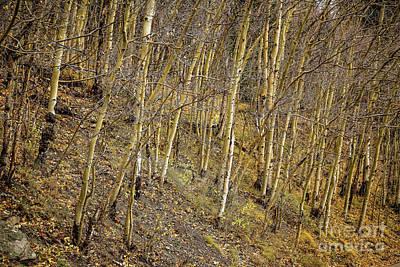The Grove Original by Jon Burch Photography