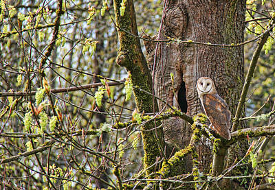 Photograph - The Guardian Barn Owl by Jennie Marie Schell