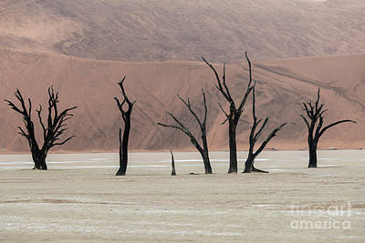 Photograph - The Guardians - Dead Vlei by Sandra Bronstein