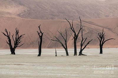 Photograph - The Guardians - Dead Vlei by Sandra Bronstein