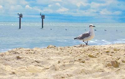 Walter Gantt Wall Art - Photograph - The Gull At The Beach by Walter Gantt