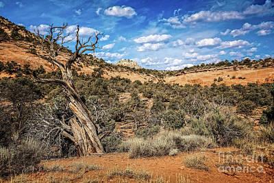 Photograph - The Hangin' Tree by Jon Burch Photography