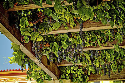 Photograph - The Hanging Grapes by Camille Lopez