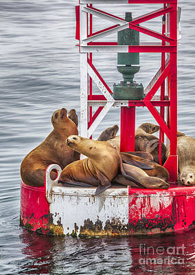 Photograph - The Hangout Sea Lions Large Canvas Art, Canvas Print, Large Art, Large Wall Decor, Home Decor by David Millenheft