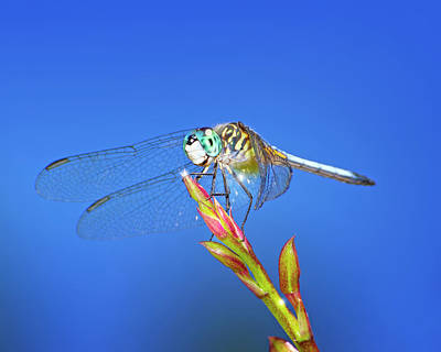 Photograph - The Happy Dragonfly by Mark Andrew Thomas
