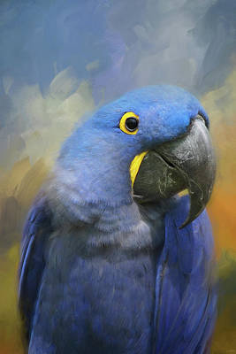 Photograph - The Happy Macaw by Jai Johnson