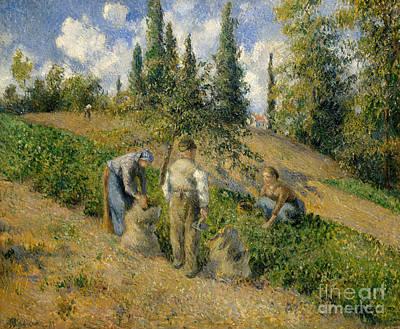 Potato Painting - The Harvest, Pontoise, 1881  by Camille Pissarro
