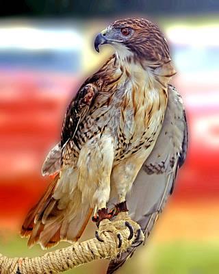 The Hawk Art Print by Joseph Williams