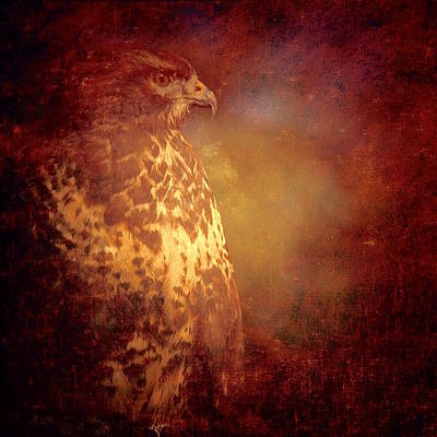 Photograph - The Hawk by Richard Cummings