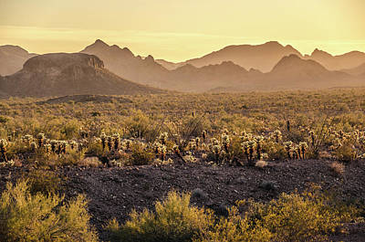 Photograph - The Hazy Desert by Margaret Pitcher