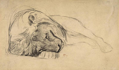 Drawing - The Head Of A Recumbent Lion by Attributed to Pierre Andrieu