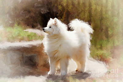 Samoyed Photograph - The Head Turner by Lois Bryan