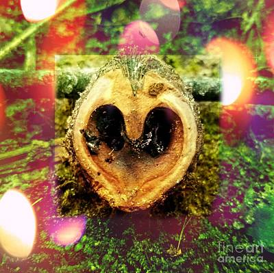 Photograph - The Heart In Nature by Justin Moore