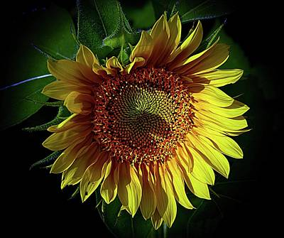 Photograph - The Heart Of A Sunflower by Karen McKenzie McAdoo