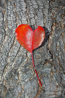 Photograph - The Heart Of A Tree by Debra Thompson
