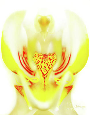 Art Print featuring the photograph The Heart Of An Alien-orchid by Jennie Breeze